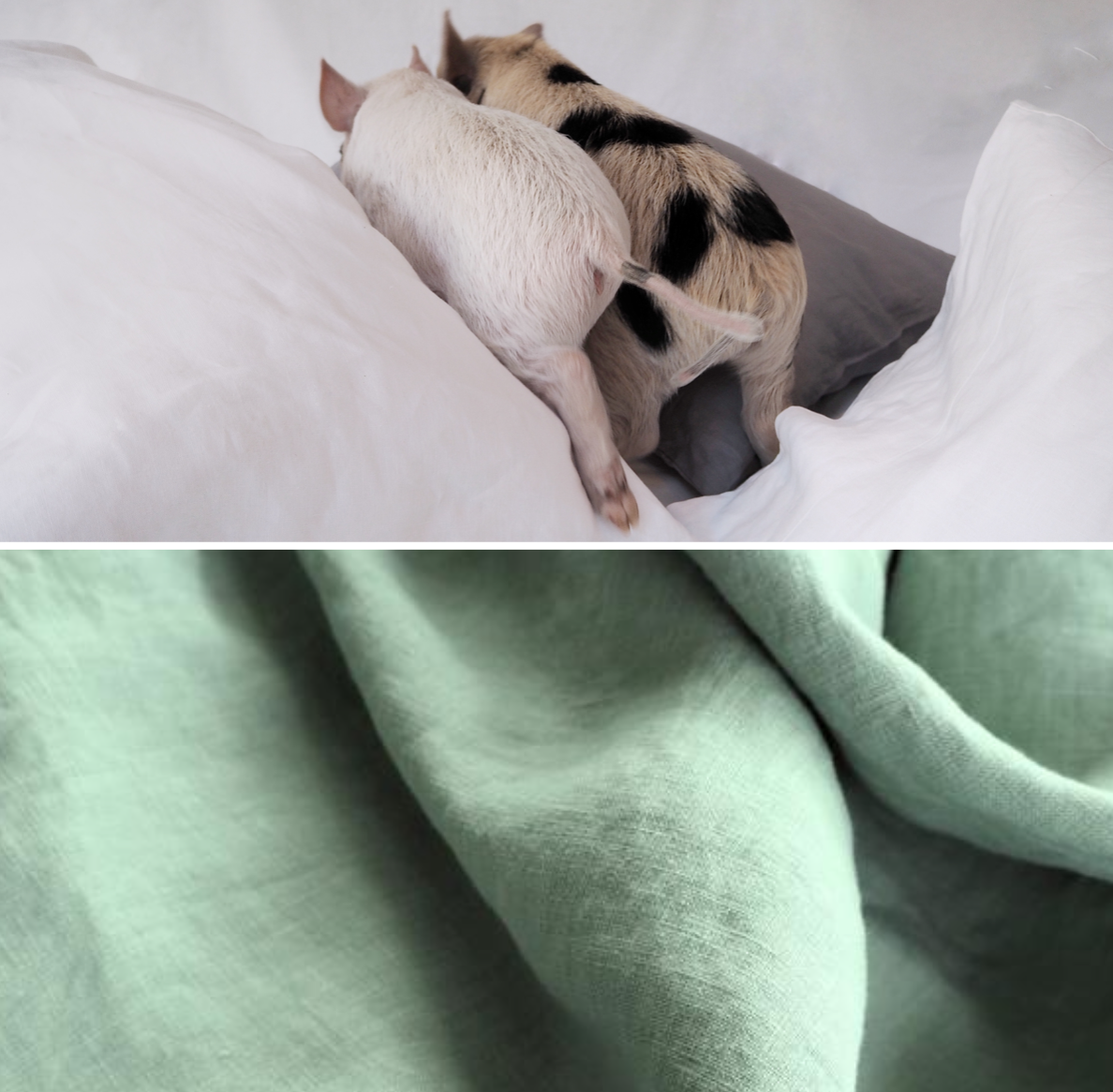 Piglet running through bed sheets and link to Piglet Green Duvet Cover