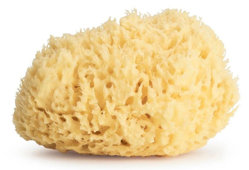 Sevin Golden Honeycomb Sponge, £34.00
