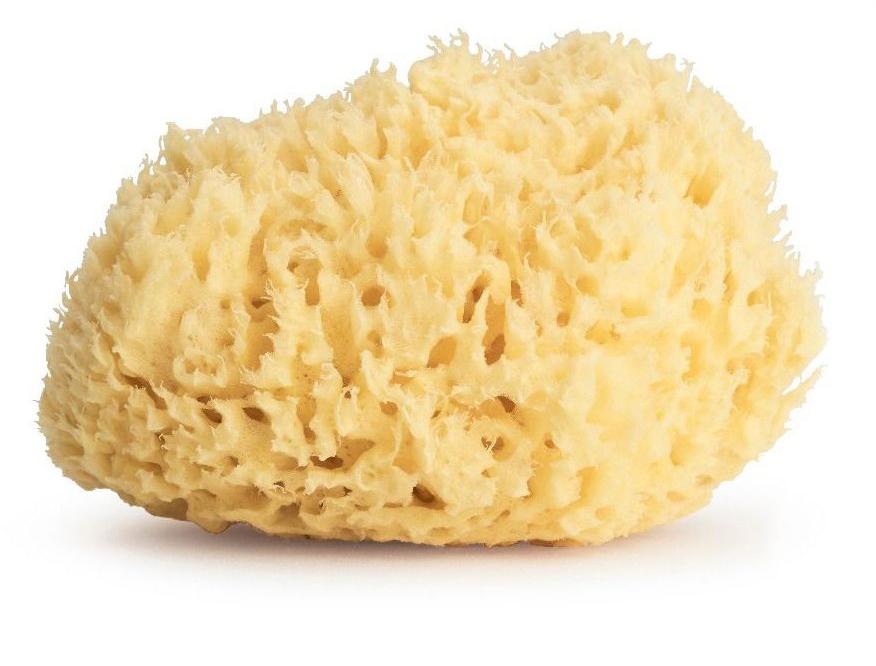 Golden Honeycomb Sponge